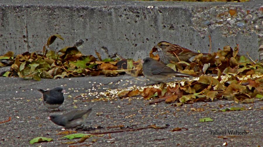 Birds by ThePurpleLilac