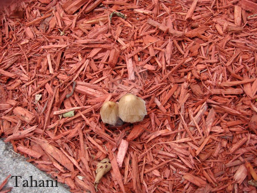 Mushroom by ThePurpleLilac