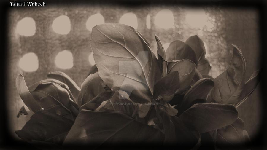 Dark side by ThePurpleLilac