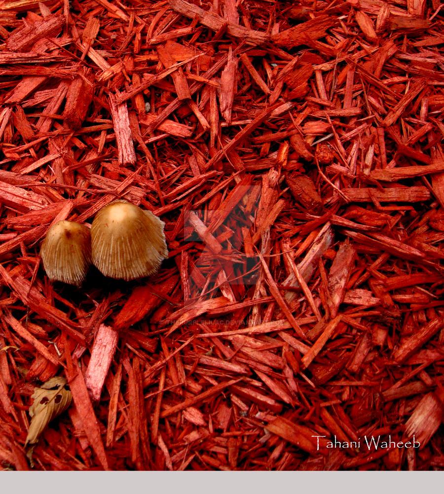 Mushroom at the park by ThePurpleLilac