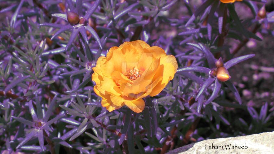 flower 7 by ThePurpleLilac