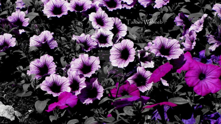 flower 10 by ThePurpleLilac