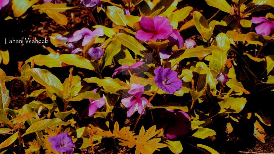 flower 11 by ThePurpleLilac