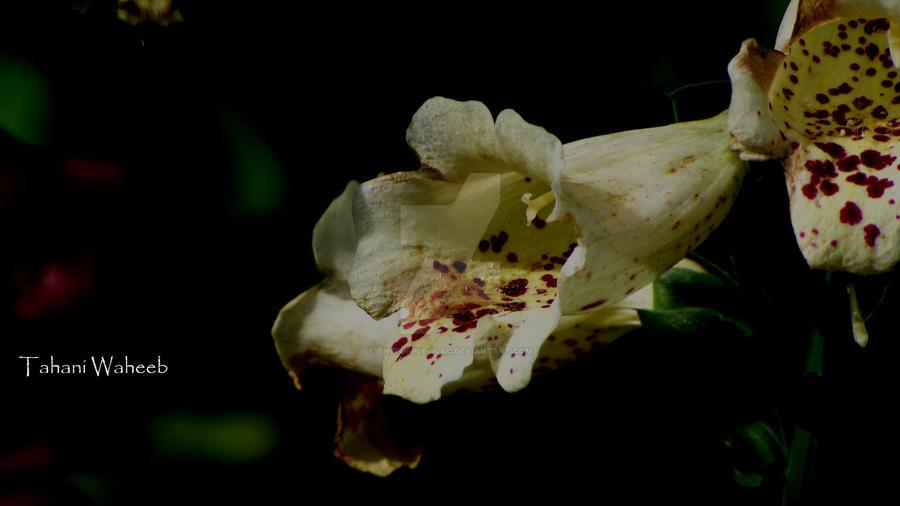 flower 12 by ThePurpleLilac