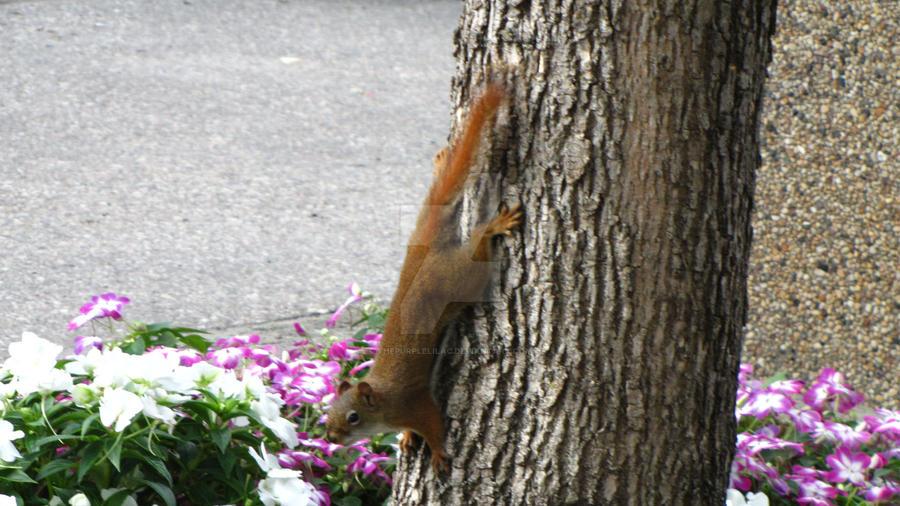 cute squirrel 3 by ThePurpleLilac