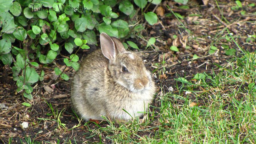 Rabbit by ThePurpleLilac
