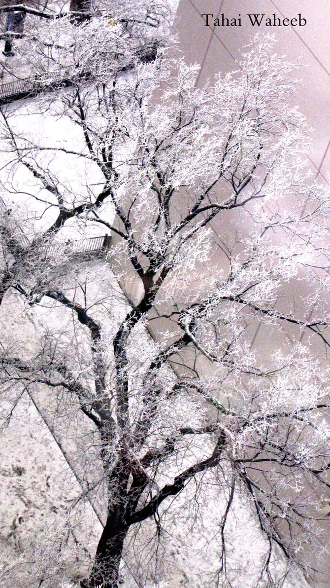 serenity by ThePurpleLilac