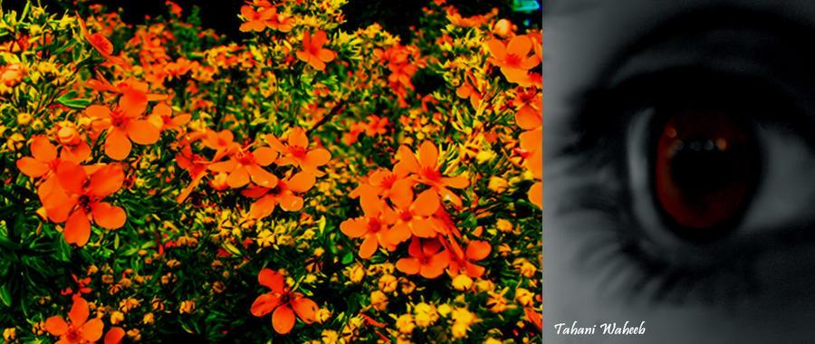 Live in Orange by ThePurpleLilac