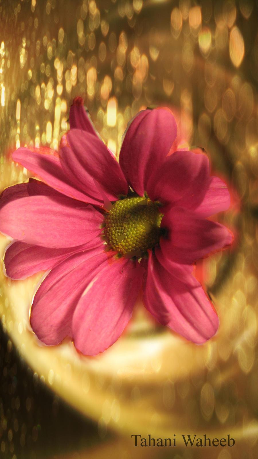 flower bokeh by ThePurpleLilac