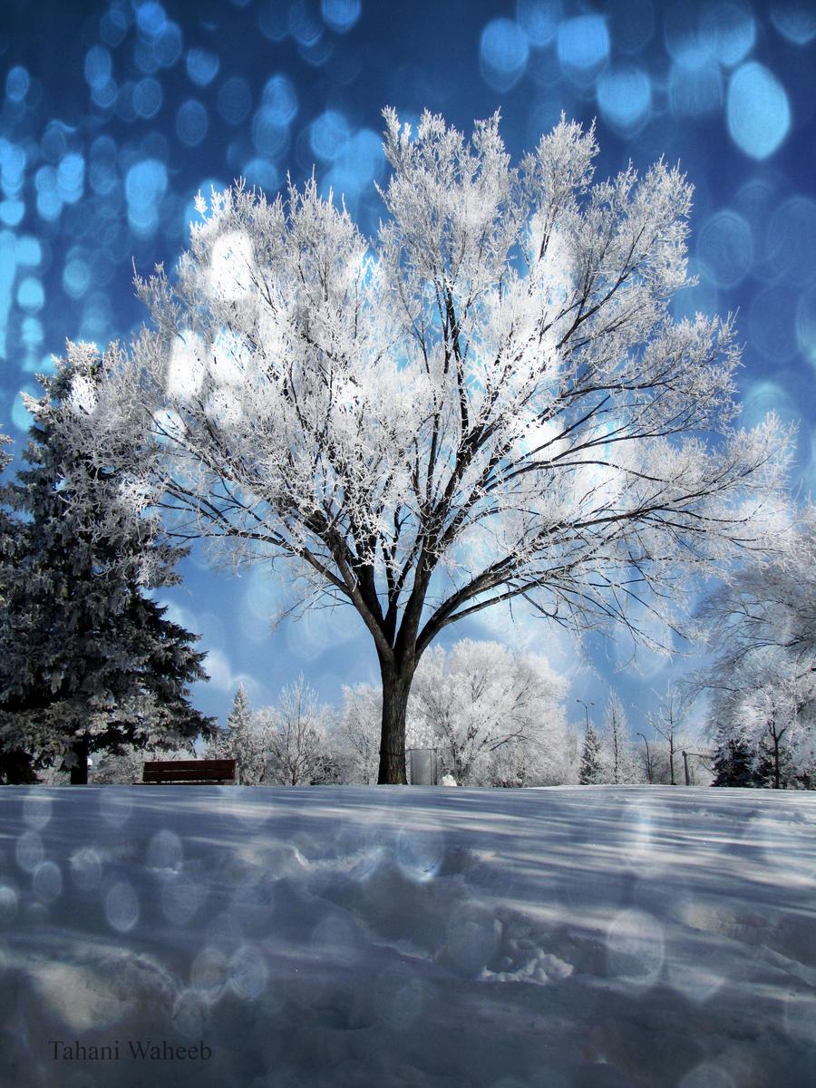 correct tree bokeh by ThePurpleLilac
