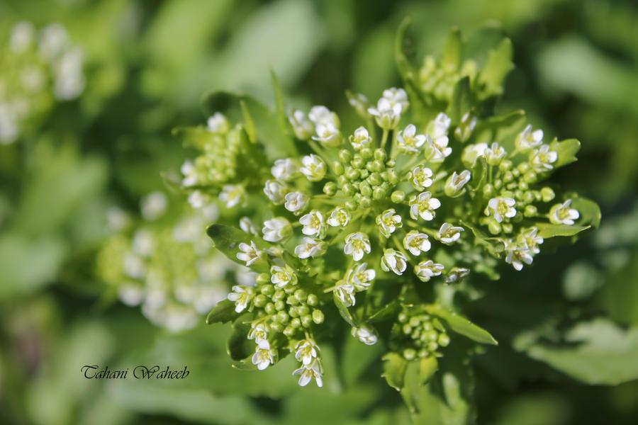 Little Flower 1 by ThePurpleLilac