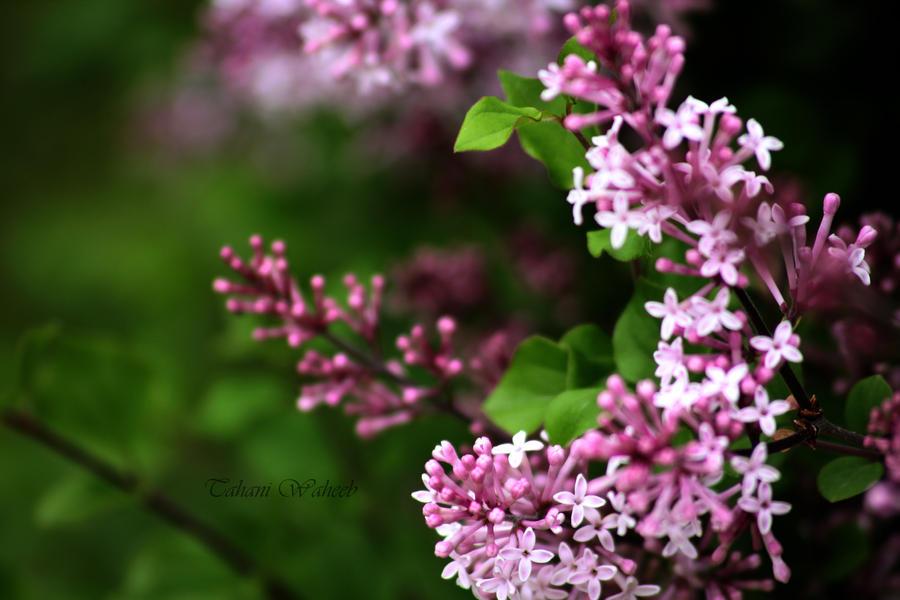 flowers 1 by ThePurpleLilac