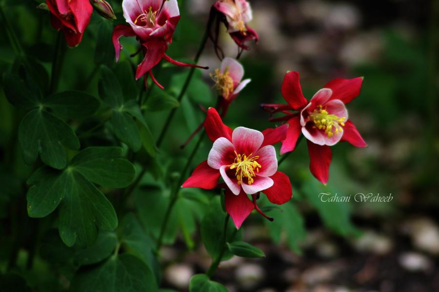 flowers 2 by ThePurpleLilac