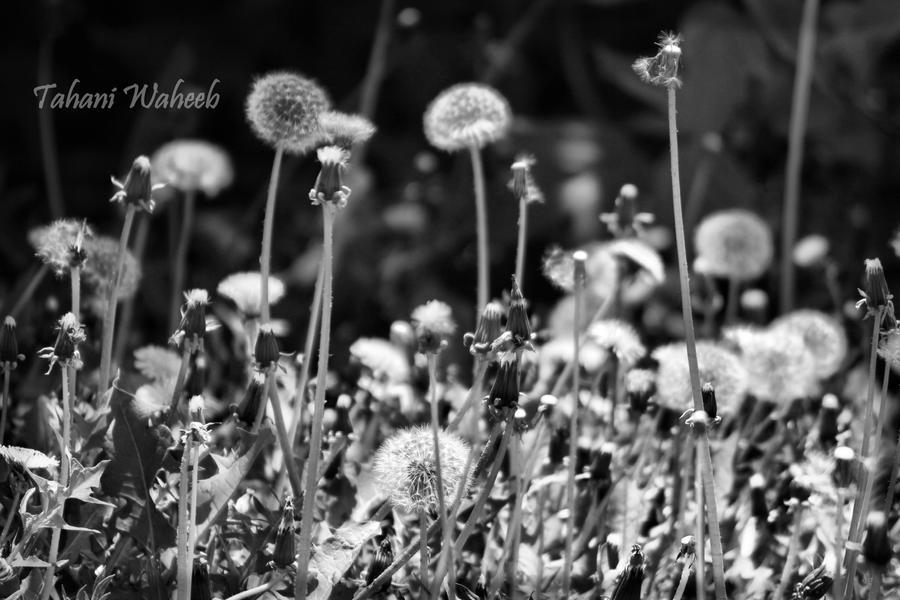 flowers 4 by ThePurpleLilac