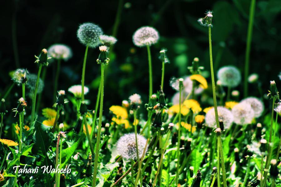 flowers 5 by ThePurpleLilac