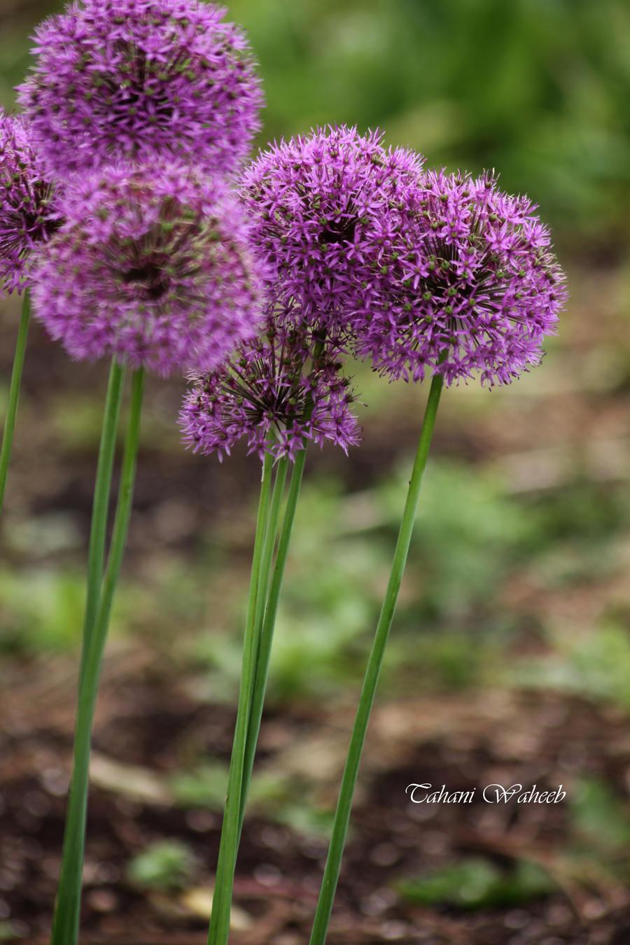 Flower macro 5 by ThePurpleLilac
