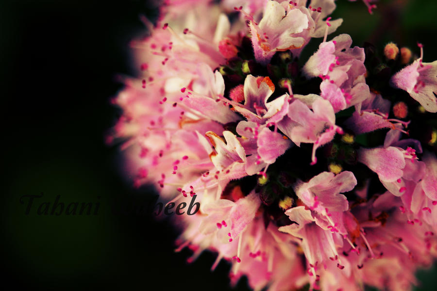 Flower Bokeh - color by ThePurpleLilac
