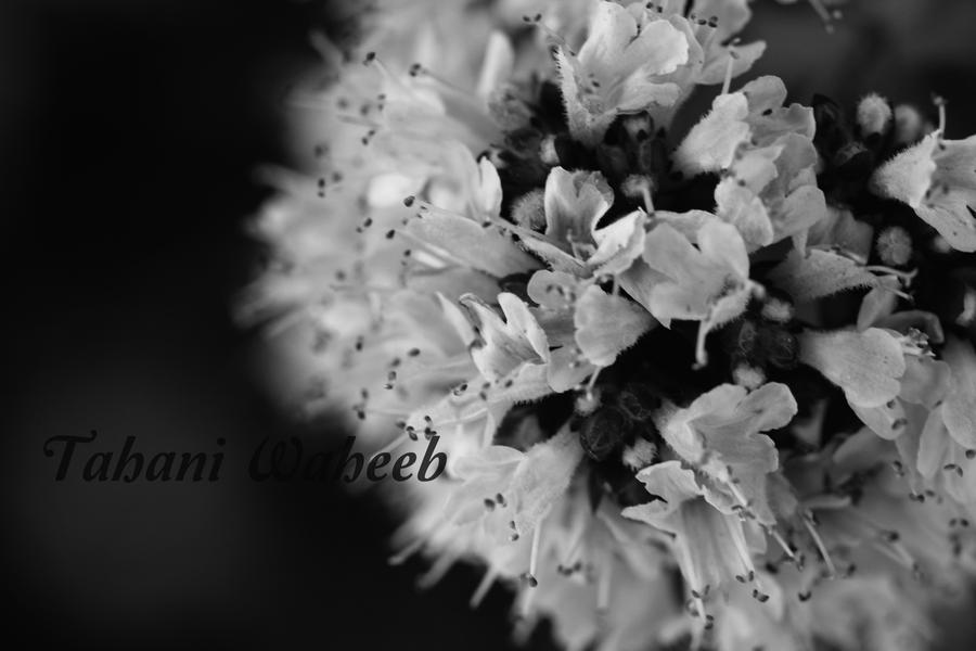 Flower Bokeh - black and White by ThePurpleLilac