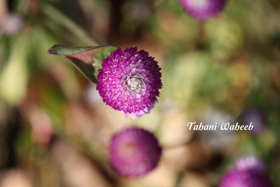 Autumn Flower 1 by ThePurpleLilac