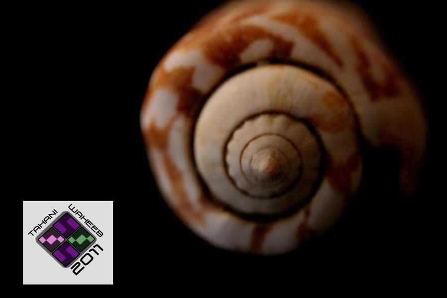 Sea Shell 5 by ThePurpleLilac