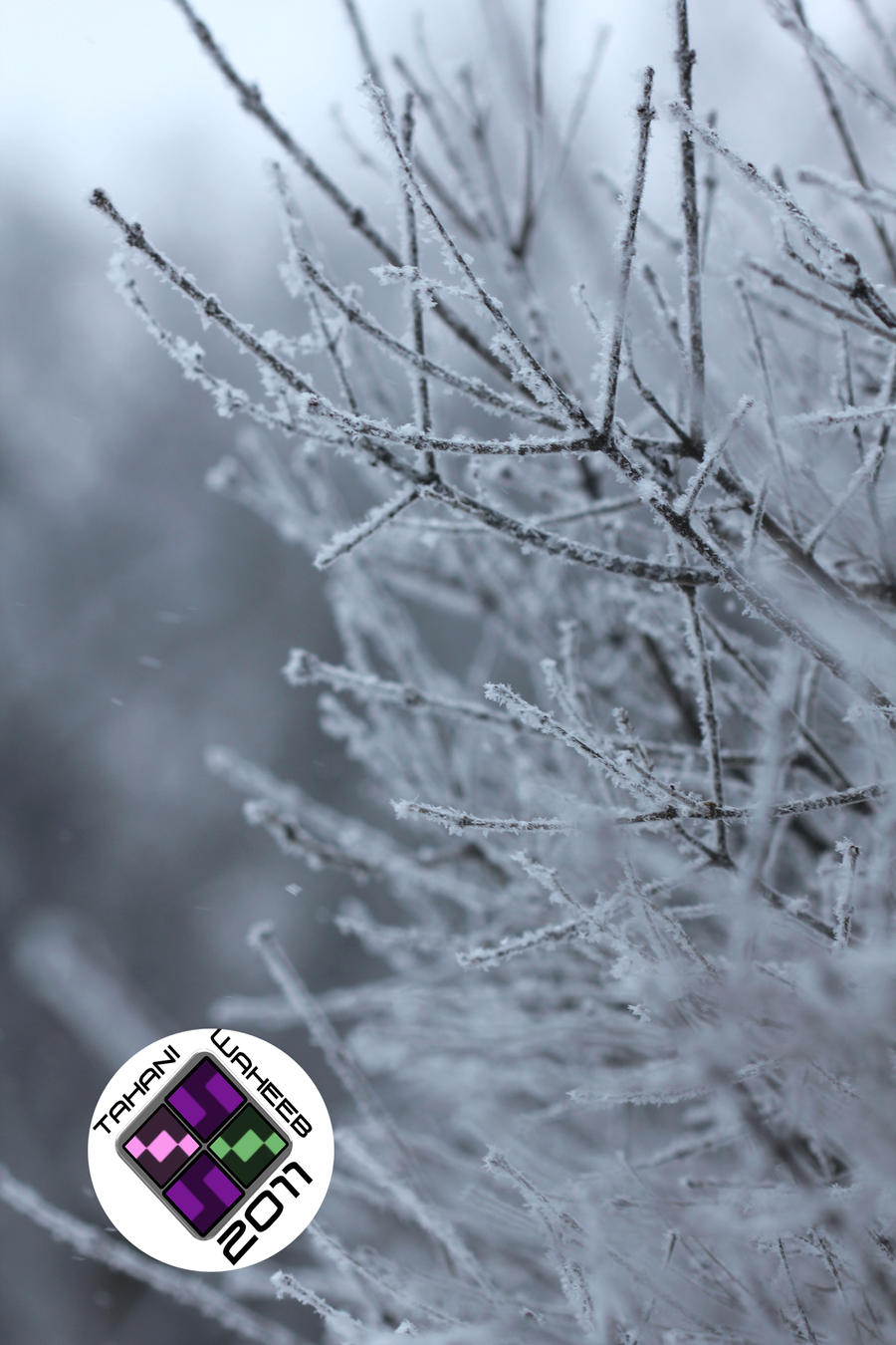 Snowy day 1 by ThePurpleLilac