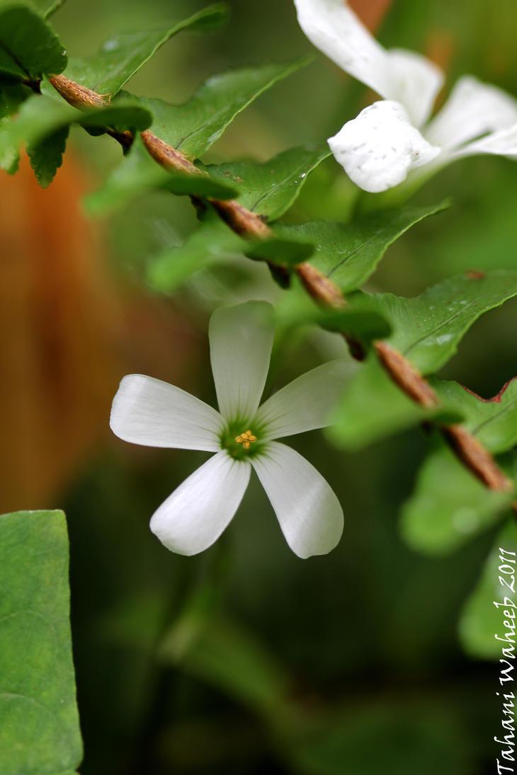 Little cute flower by ThePurpleLilac