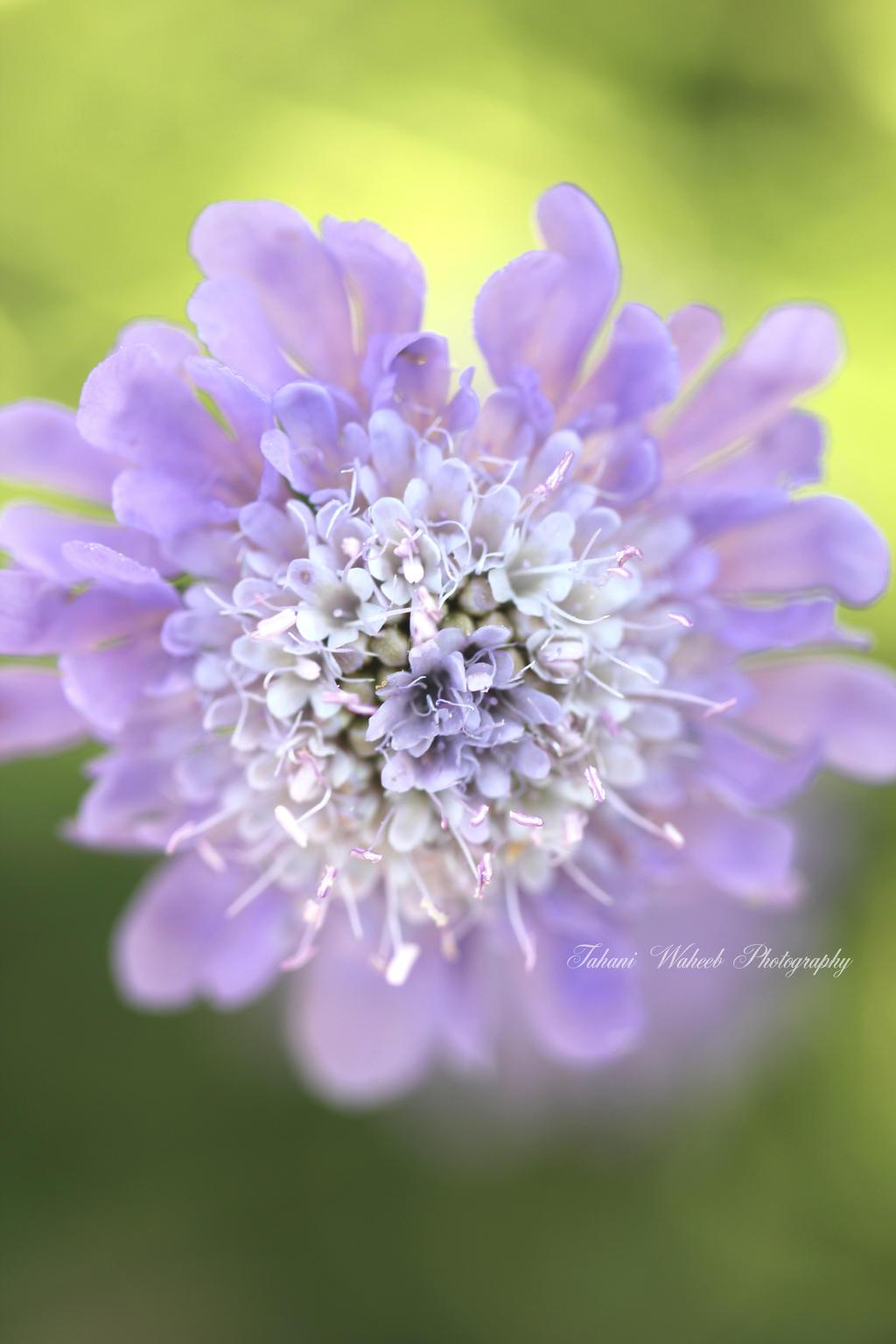 Simply purple by ThePurpleLilac
