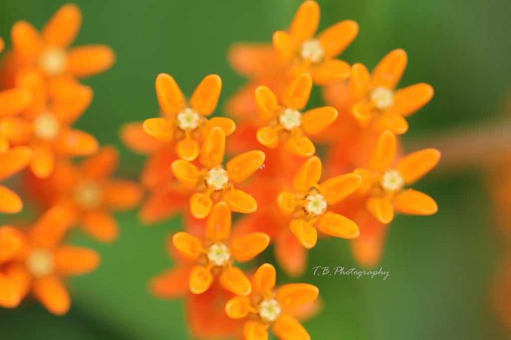 Orange by ThePurpleLilac