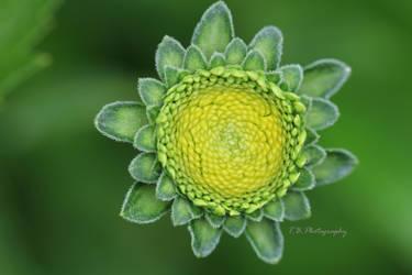Green Sun by ThePurpleLilac