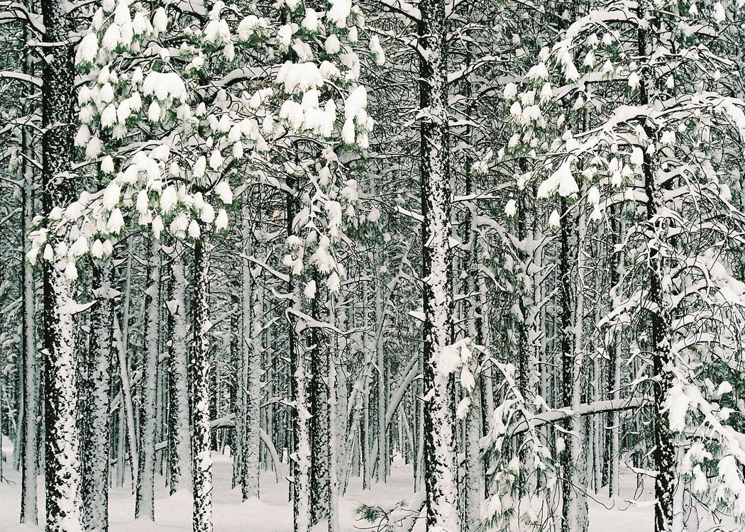 Wintery Attire