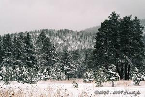 Winter Post Card I