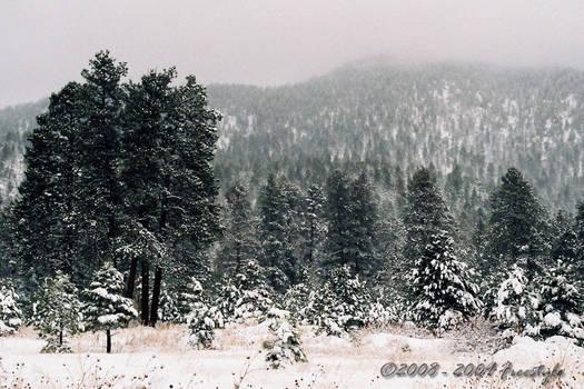 Winter Post Card II