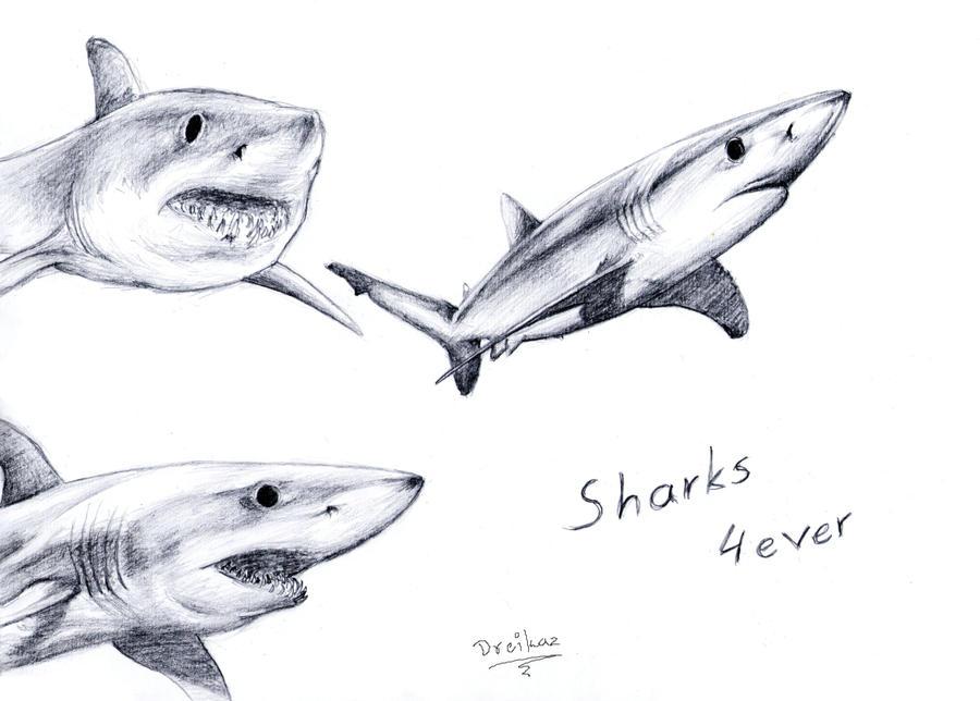 Sharks by Dreikaz