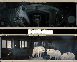 set-E-wolf-room