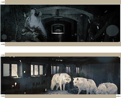set-E-wolf-room by dapet