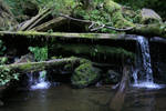 forest 48: waterfall
