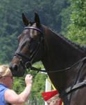 horse 49: headshot in bridle