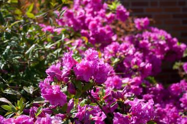 IMG_4459 flowers