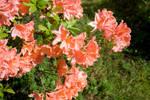 IMG_4466 flowers