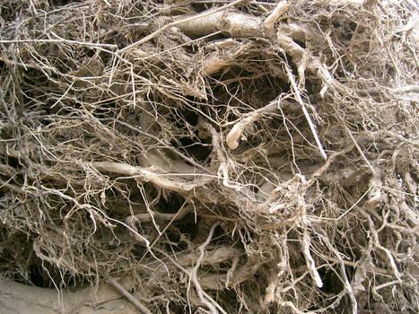 texture: root wad