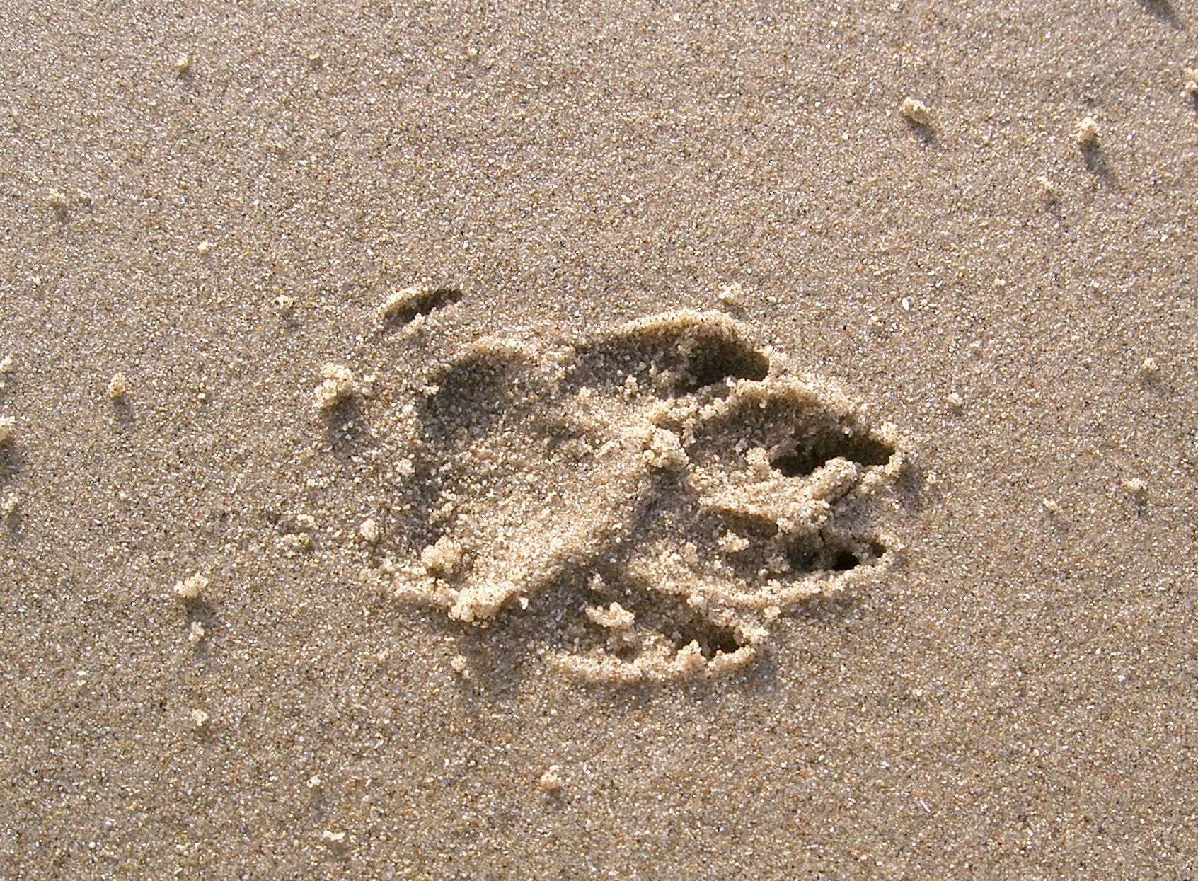 footprint 02: dog in sand