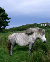 pony 12 by cyborgsuzystock
