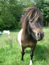 pony 15 by cyborgsuzystock
