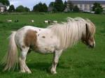 pony 18: stallion