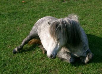 pony 19 by cyborgsuzystock