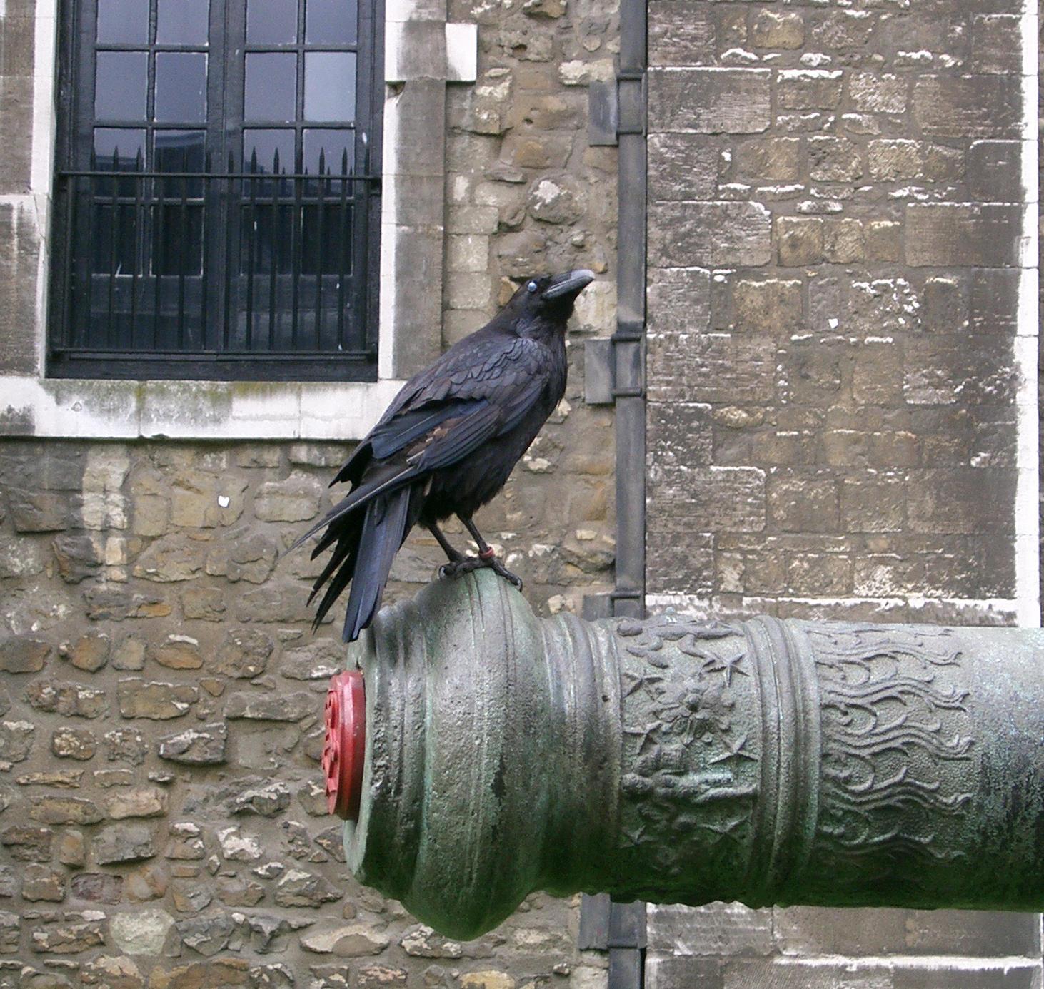 birdy 18: raven by cyborgsuzystock