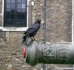 birdy 18: raven