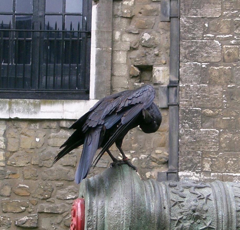 birdy 19: raven by cyborgsuzystock