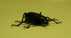 bug 15: beetle