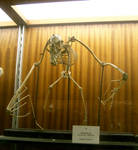 bat bones 01